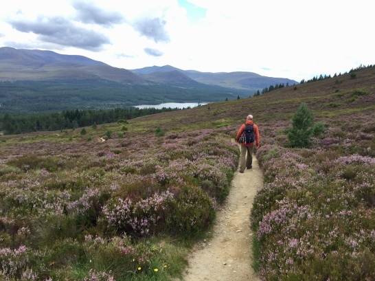 Heading down from Meall a' Bhuachaille, Loch Morlich in the distance