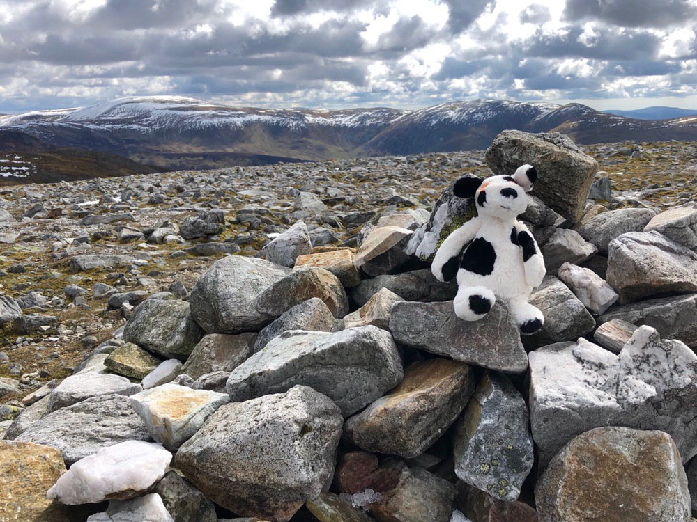 Charlie Dog on Carn a' Gheoidh #50in150 #charliehouse