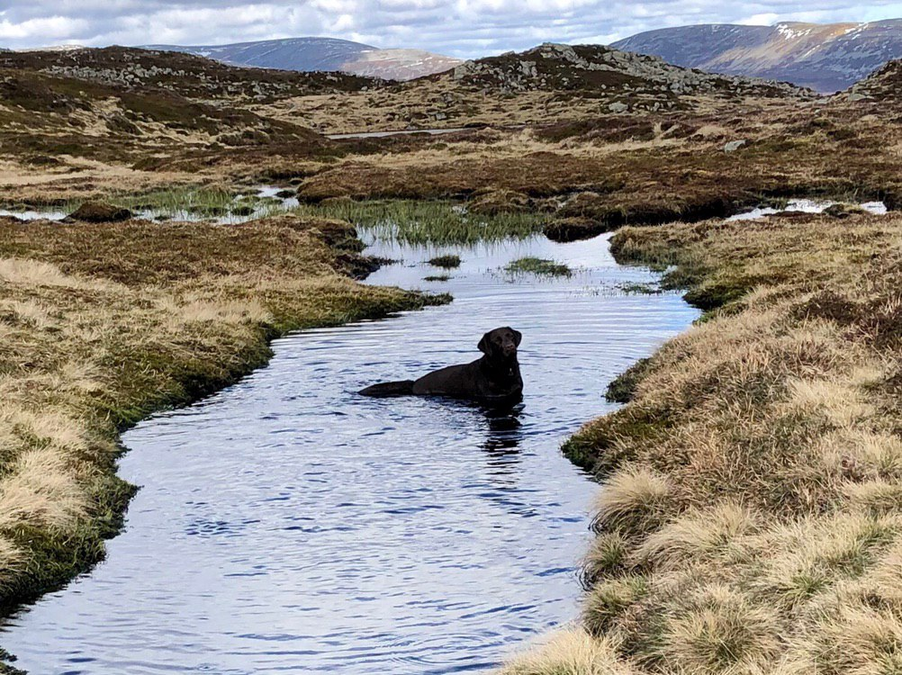 The Cairnwell Trio: Bella takes a dip (Glenshee)