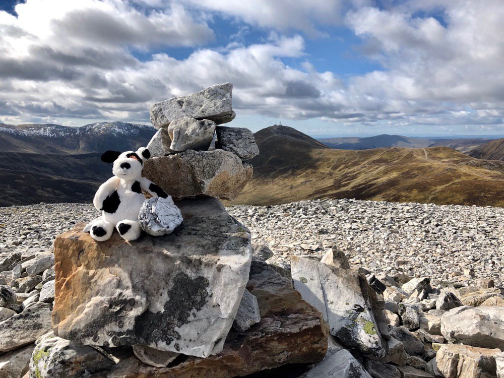 Charlie dog: on top of Carn Aosda #50in150