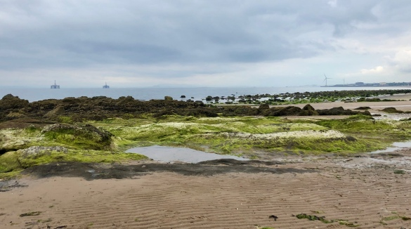 Fife Coastal Path: looking back from Lundin Linkd