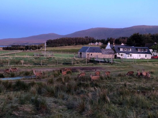 Herd of deer outside in the evening
