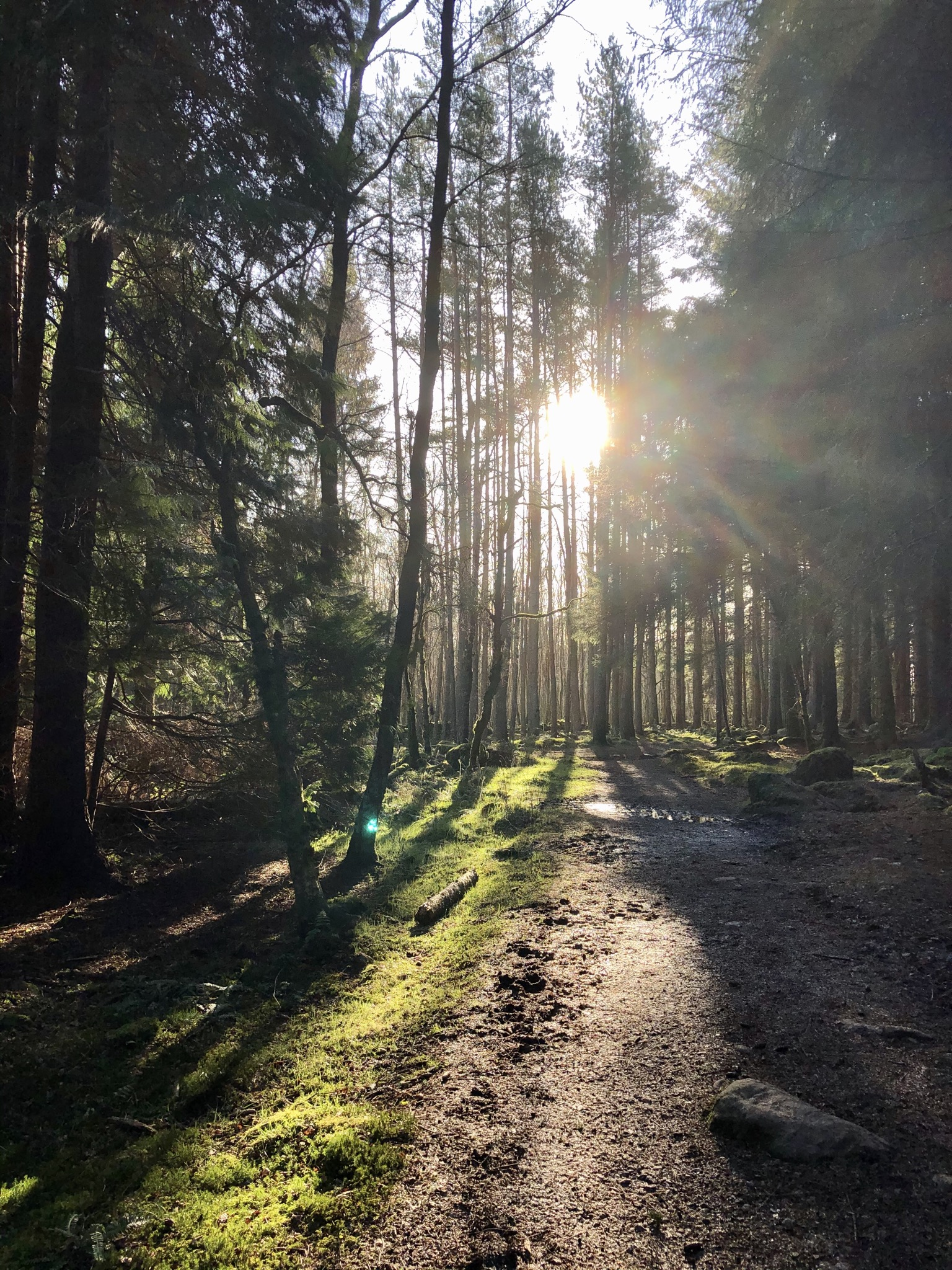 Scolty Trails, Banchory